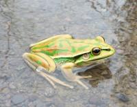 Frog Story.jpg